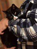 noir avec le chat blanc sur des mains Photos stock