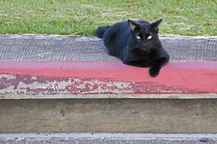 Noir de chat Images libres de droits