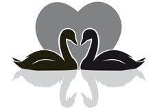 Noir de cygnes illustration libre de droits