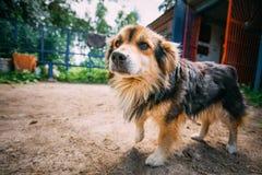 Noir de petite taille de race mélangée et chien de couleurs de Brown Photographie stock