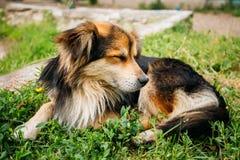 Noir de petite taille de race mélangée et chien de couleurs de Brown Images libres de droits