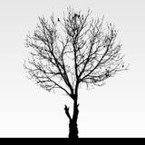 Noir de silhouette d'arbre Photographie stock libre de droits