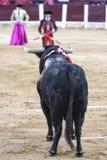 Noir de Taureau 650 kilogrammes regardant complètement le banderillero prêt à mettre des drapeaux dans l'arène d'Ubeda Photo stock