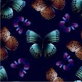 Noir du papillon 05 Images stock