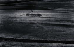 Noir et blanc : Désert et arbre Photos libres de droits