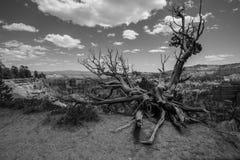 Noir et blanc de Bryce Canyon National Park, Utah image libre de droits