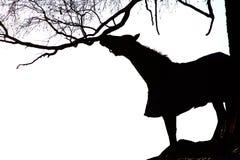 Noir et blanc du cheval et de l'arbre Image libre de droits