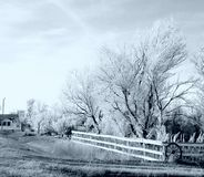 Noir et blanc glacé au-dessus des arbres photographie stock libre de droits