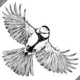 Noir et blanc gravez l'illustration d'isolement de vecteur de mésange illustration de vecteur
