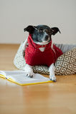 Noir - verres de port de chien blanc et costume rouge sur son divan au milieu d'une salle vide Images stock