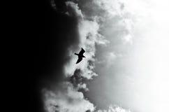 Noircissez CONTRE le blanc - symbole de Yin-yang de ciel de nature Photographie stock libre de droits