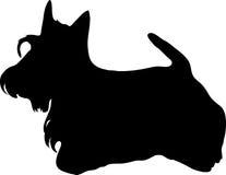 noircissez le chien terrier écossais Photos libres de droits