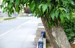 Noire, forgé, la balustrade en métal sur un bas mur de grès reculent dans la distance L'herbe et les arbres peuvent être vus par  Photographie stock