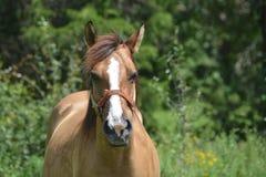 Noise horse Stock Photo