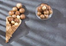 Noisetiers d'Australie - integrifolia de macadamia image libre de droits