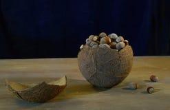 Noisettes de noix de coco de noix sur une vieille table Photographie stock