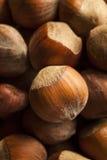 Noisettes entières organiques crues Images stock