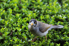 Noisy bird Stock Photography