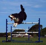 Noisy Jumper Royalty Free Stock Photography
