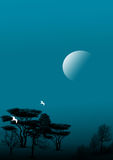 Noite Fotografia de Stock