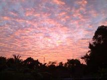 Noite alaranjada Sun ajustado sobre as árvores imagem de stock