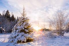 Noite bonita do inverno no parque com o sol no fundo Fotos de Stock