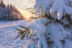 Noite bonita do inverno no parque com o sol no fundo Foto de Stock