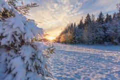 Noite bonita do inverno no parque com o sol no fundo e Imagens de Stock Royalty Free