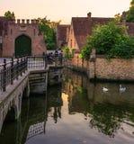 Noite Bruges cisnes foto de stock