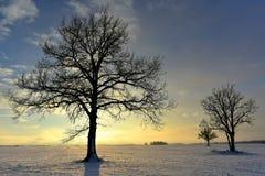 Noite colorida do inverno em Lituânia Fotografia de Stock