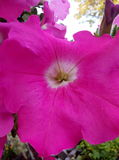 noite cor-de-rosa do verão das plantas de jardim fotos de stock