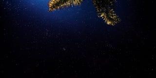 Noite da estrela Imagem de Stock