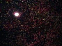 Noite da mola Fotos de Stock