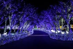 Noite de Coreia do festival da iluminação da luz de Illumia foto de stock