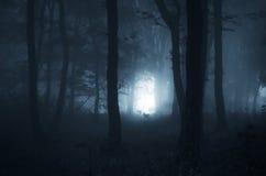 Noite de Dia das Bruxas em uma floresta místico Imagens de Stock Royalty Free