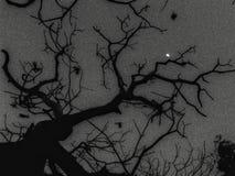 Noite de Stary Imagem de Stock