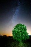 Noite de verão estrelado Foto de Stock Royalty Free