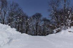 Noite disparada das árvores e da neve Foto de Stock Royalty Free