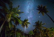 A noite disparou com palmeiras e Via Látea no fundo fotografia de stock