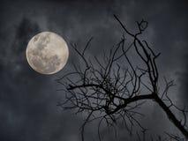 Noite do horror fotografia de stock royalty free