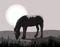 Noite do luar com um cavalo Fotografia de Stock
