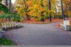 Noite do outono em Alexander Park de Tsarskoe Selo, Pushkin, St Petersburg Bancos em uma ramificação de passeios do parque Imagem de Stock