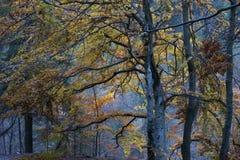 Noite do outono na floresta Fotografia de Stock Royalty Free