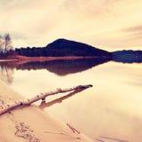 Noite do outono no lago após o por do sol Praia molhada da areia com a árvore seca caída na água Céu colorido Foto de Stock