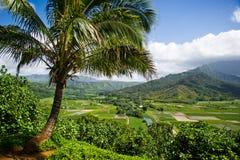 Noite do vale de Hanalei, Kauai Fotos de Stock Royalty Free