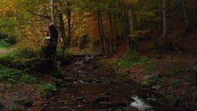 Noite em Autumn Forest Clear Water em um córrego da montanha vídeos de arquivo