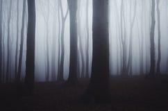 Noite escura da floresta com névoa azul Foto de Stock