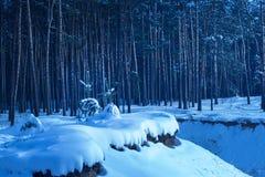 Noite espetacular do inverno nos subúrbios de uma floresta do pinho Imagens de Stock Royalty Free
