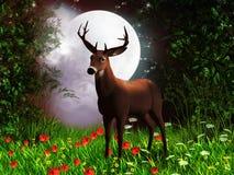 Noite feericamente Foto de Stock