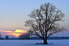 Noite fria e colorida do inverno em Lituânia Imagens de Stock Royalty Free